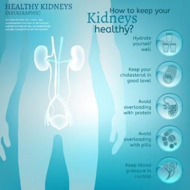Water is the driving force of all nature. Vector illustration of bio infographics with human body organs icons in transparent style. Medicine and biochemistry concept. Keep your kidneys healthy